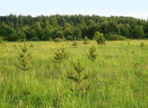 Леса на сельскохозяйственных землях
